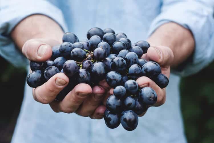 biologische wijn uit Italië